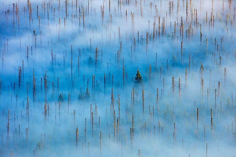 Lo scatto Una vita nuova in un bosco morto di Radomir Jakubowski, al primo posto della categoria Piante e funghi.