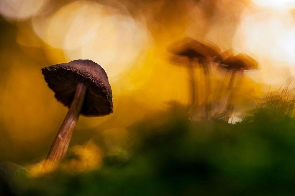 Lo scatto Un mondo magico di Florian Smit.