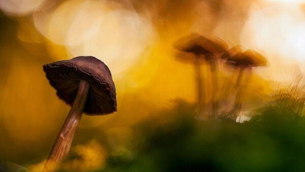 Пятое место в категории Растения и Грибы в конкурсе GDT Nature Photographer of the Year 2020 - Sputnik Italia