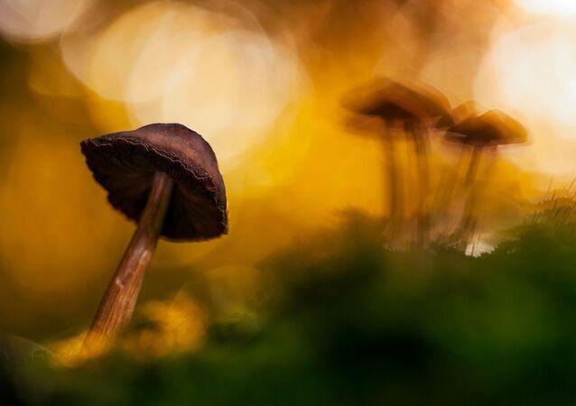 Funghi (foto d'archivio)