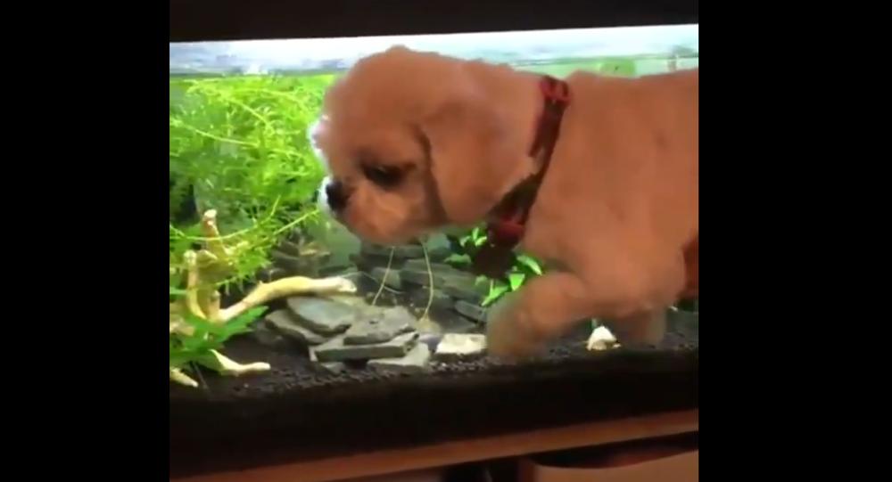 Cane che nuota - Video