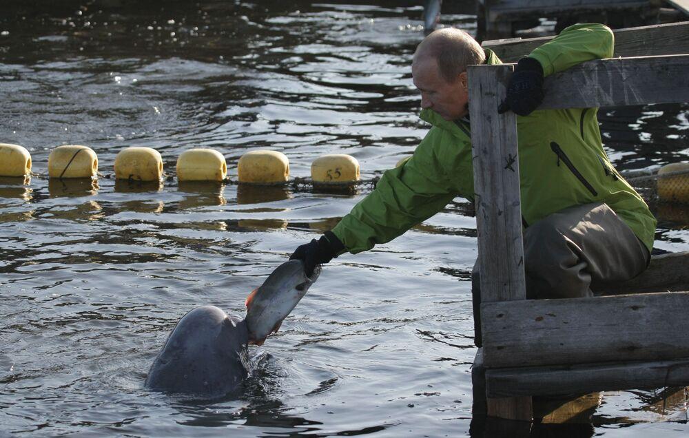 Il premier russo Vladimir Putin dà da mangiare a una beluga nell'Estremo Oriente russo, il 31 luglio 2009.