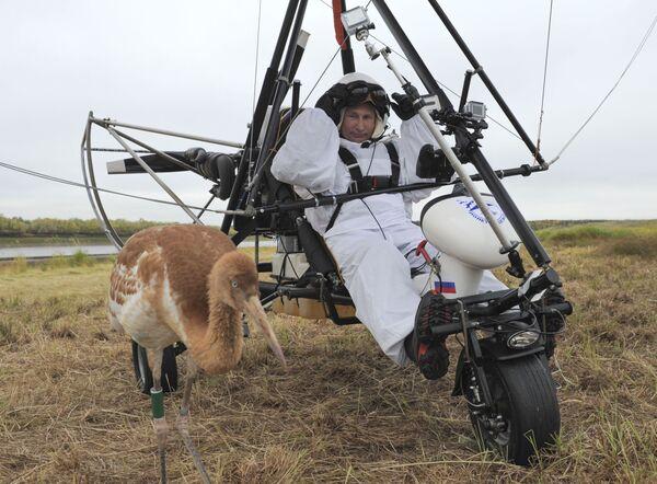 Il presidente russo Vladimir Putin partecipa al progetto ecologico Il volo della speranza e ha volato con gli uccelli, il 5 settembre 2012.  - Sputnik Italia