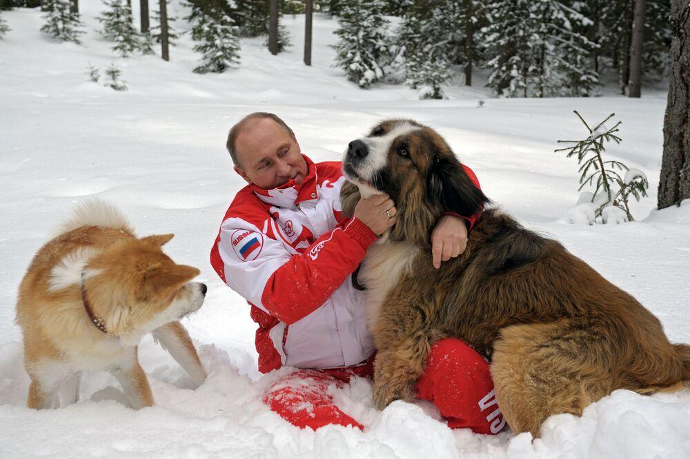 Putin fa una passeggiata con i cani nella regione di Mosca, il 24 marzo 2013.