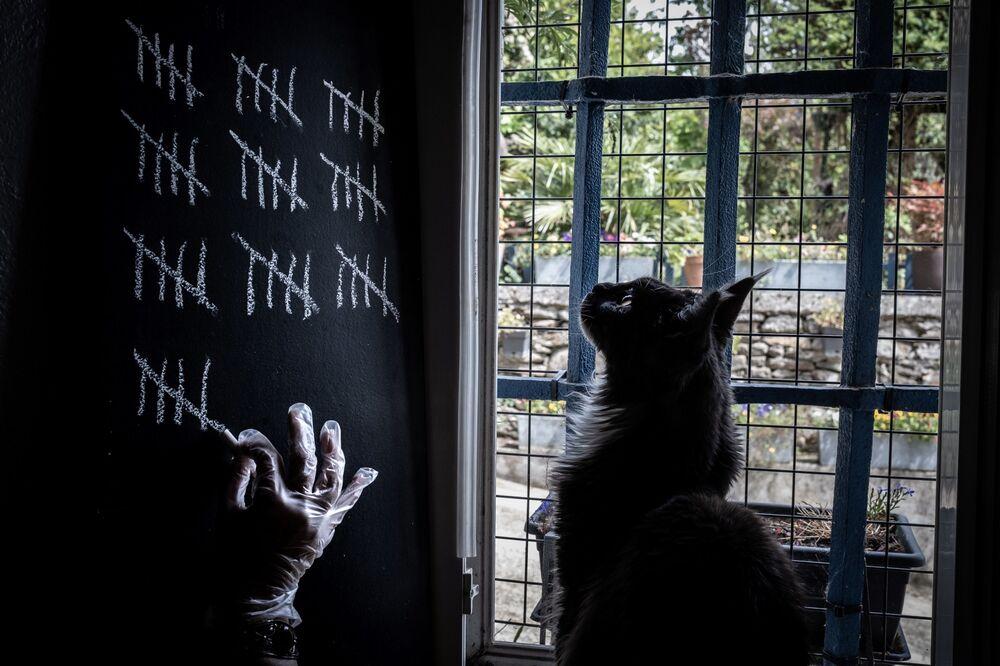 Un gatto in quarantena per l'epidemia del coronavirus, Francia