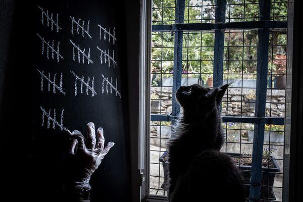 Un gatto in quarantena per l'epidemia del coronavirus, Francia - Sputnik Italia