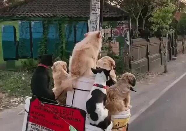 Cani in motorino