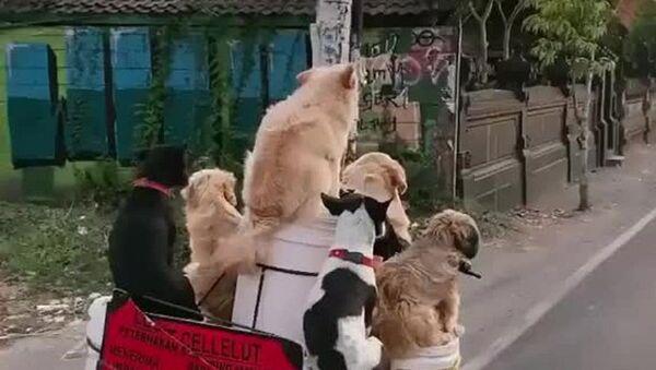 Dogs - Sputnik Italia