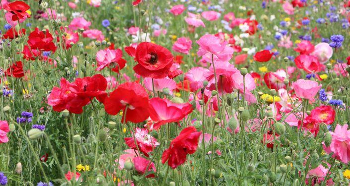 I fiori in un parco di Milano