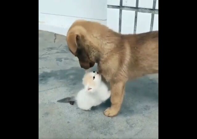 Gattino e cagnolino video