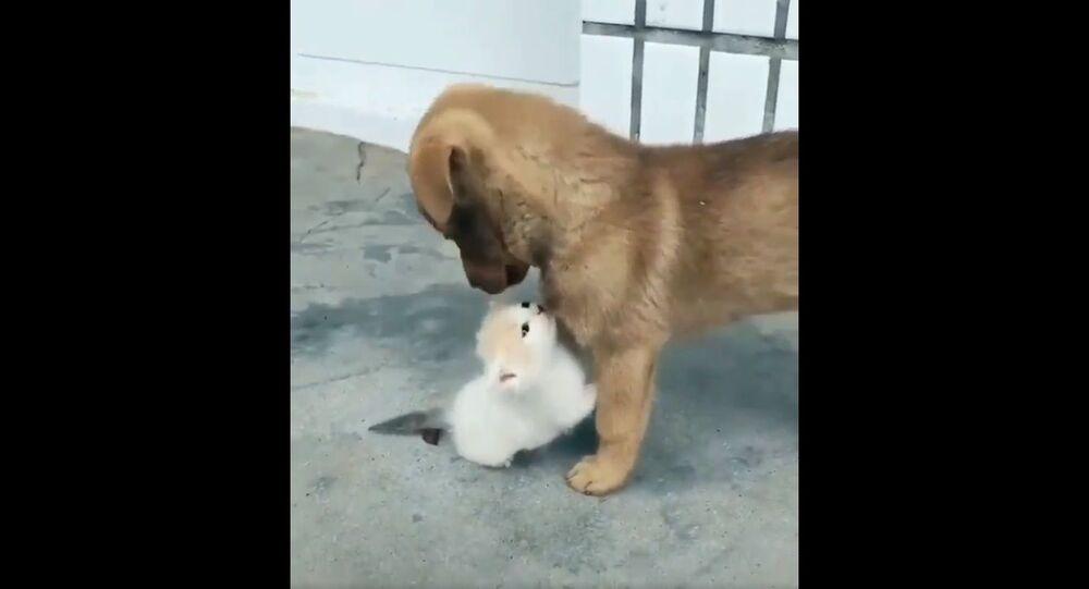 Gattino e cagnolino video