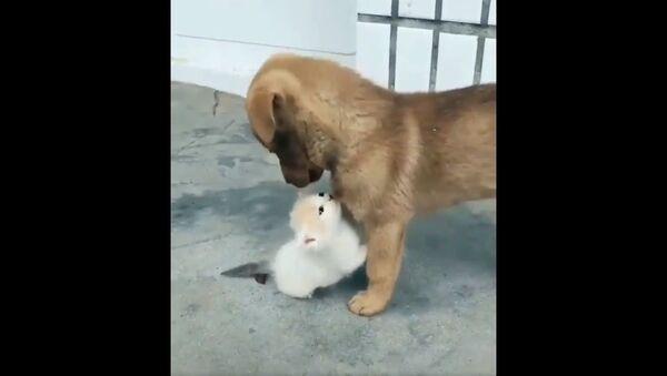 Gattino e cagnolino video - Sputnik Italia