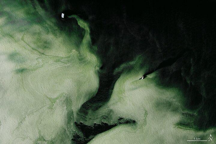 La neve dell'Antartide sta cambiando colore a causa dei cambiamenti climatici