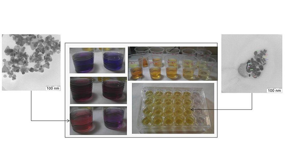 Experiment with zebrafish (Danio rerio) embryos.