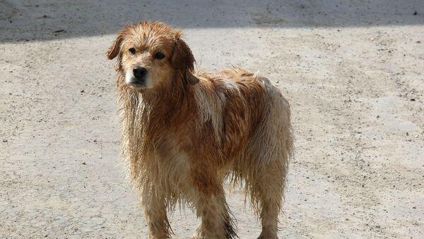 Un perro, foto de archivo - Sputnik Italia