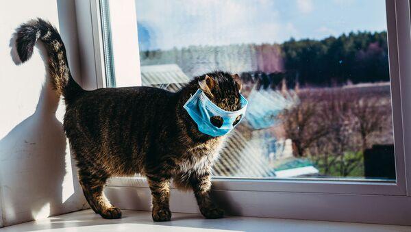 Кошка в маске на подоконнике  - Sputnik Italia