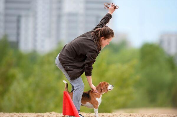 Il beagle con la sua padrona durante l'addestramento  - Sputnik Italia