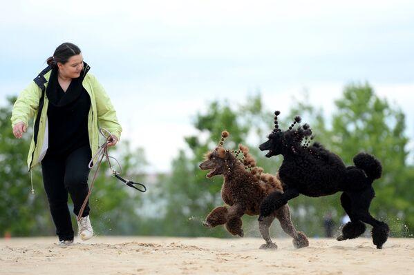 Barboncini con la loro padrona durante l'addestramento dei cani - Sputnik Italia