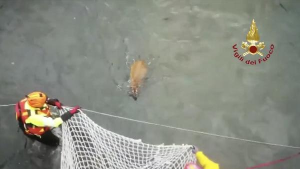 I vigili del fuoco soccorrono un capriolo scappato da un parco della zona e finito in un canale - Sputnik Italia