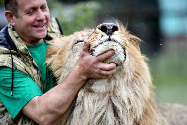 Il direttore del safari park di Taigan Oleg Zubkov con un leone.  - Sputnik Italia