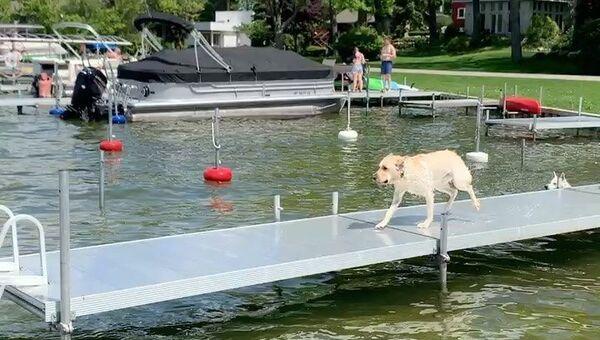 Labrador Retriever si tuffa nel lago - Video - Sputnik Italia