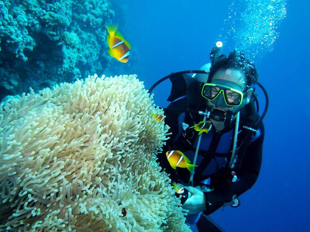 Un subacqueo osserva gli abitanti del mare.