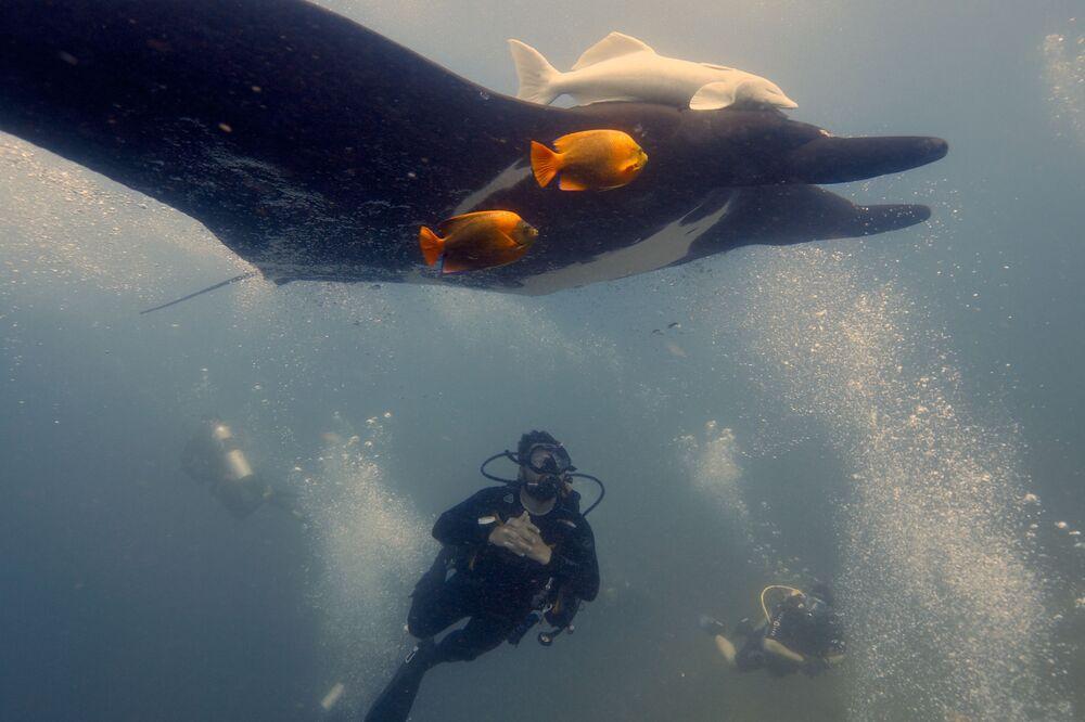 Una manta gigante nell'oceano.