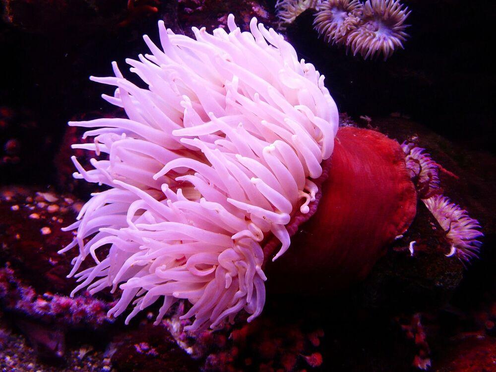Un'anemone di mare.