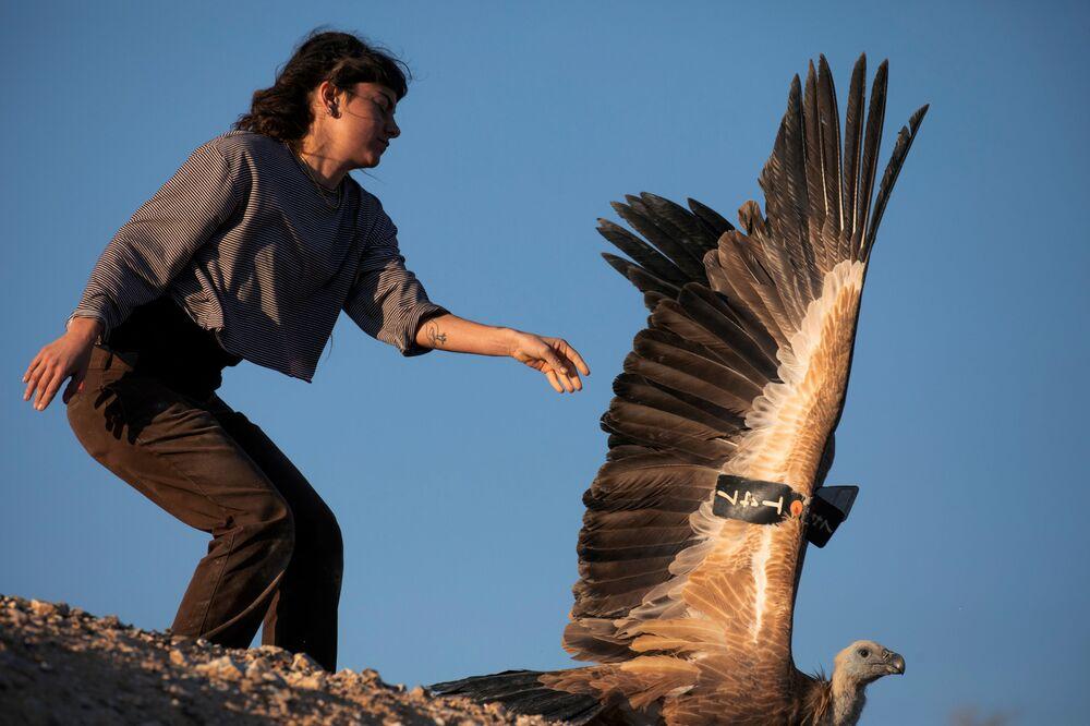 Una dipendente dello zoo safari Ramat Gan in Israele lascia andare un grifone
