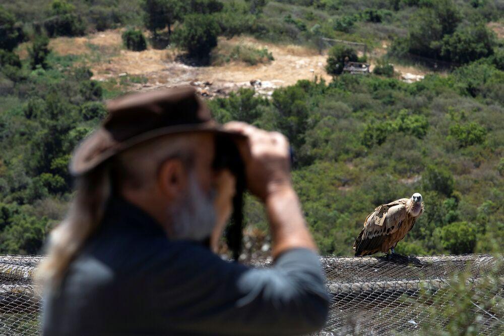 L'osservazione degli uccelli nella riserva naturale Hai-Bar nelle montagne di Carmel, Israele