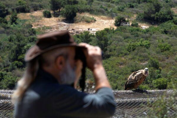 L'osservazione degli uccelli nella riserva naturale Hai-Bar nelle montagne di Carmel, Israele - Sputnik Italia