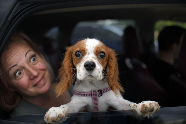 Un cane affacciato da finestrino di un'automobile a Snagov, Romania - Sputnik Italia