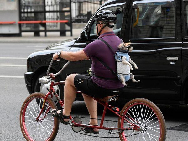 Un ciclista con un cane a Londra - Sputnik Italia