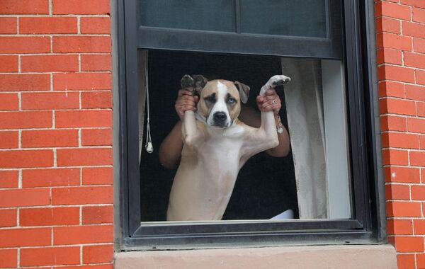 Il cane e il suo proprietario sostengono una protesta contro la disuguaglianza razziale in relazione alla morte di George Floyd, Boston, USA - Sputnik Italia