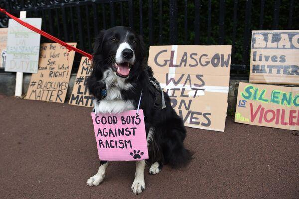 Il cane con uno striscione Bravi ragazzi contro il razzismo durante una dimostrazione a sostegno del movimento Black Lives Matter a Edimburgo - Sputnik Italia
