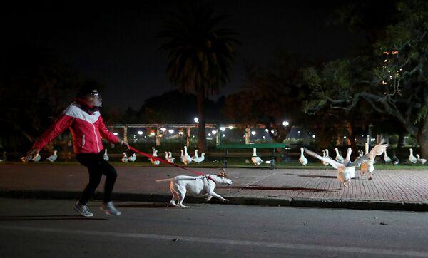 Una donna cammina con un cane a Buenos Aires, Argentina - Sputnik Italia