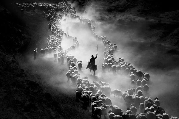 Good Sheepherd del fotografo F. Dilek Uyar, il terzo posto della categoria People.  - Sputnik Italia