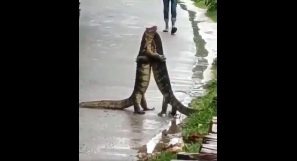 Video di due varani che si abbracciano
