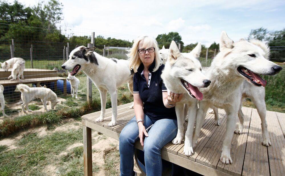 L'allevatore di husky siberiano Christine Biddlecombe con alcuni dei suoi cani a casa sua, a Tonbridge, Inghilterra