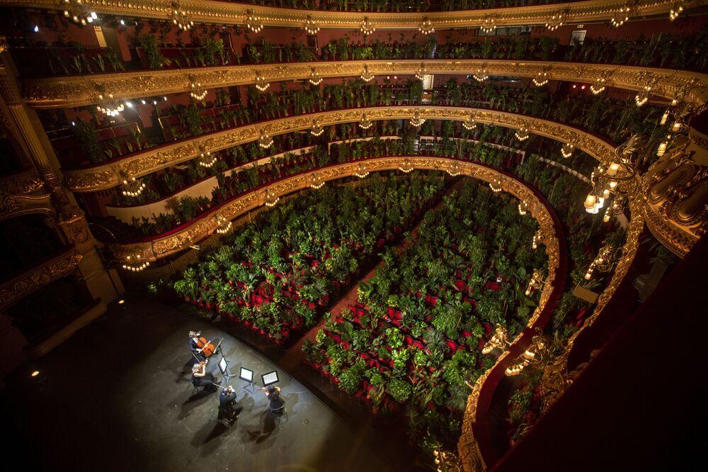 Musicisti fanno le prove nel Gran Teatre del Liceu a Barcellona, Spagna, dove i posti della sala sono occupati dalle piante.