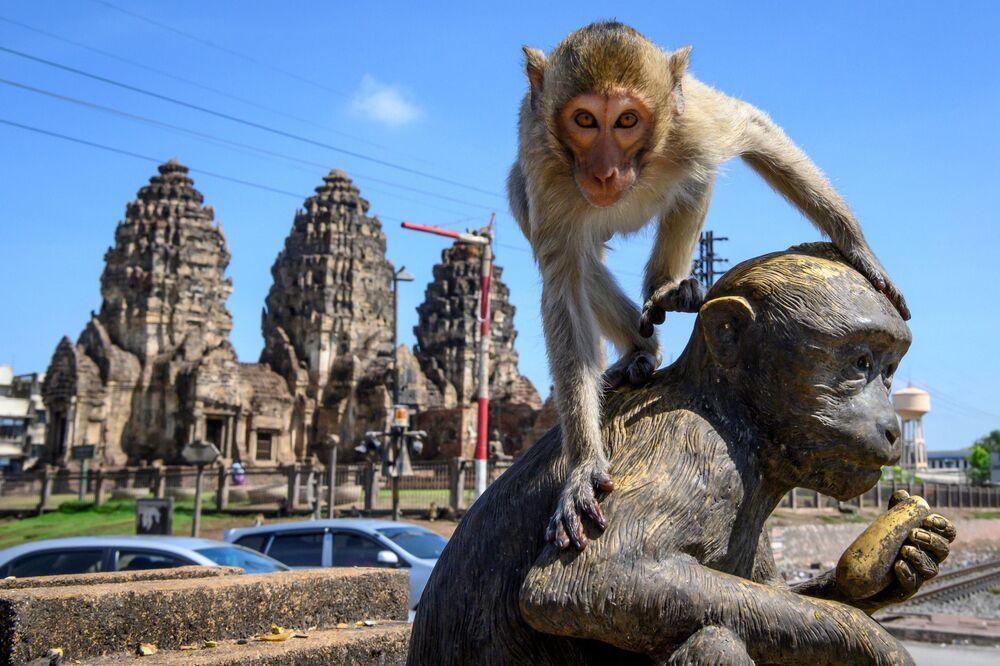 Una scimmia sulla statua davanti al tempio buddista Prang San Yod a Lopburi, Thailandia.