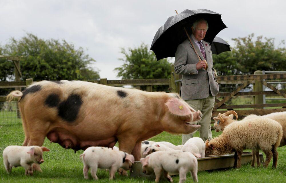 Il principe Carlo visita il parco delle fattorie Cotswold, Gran Bretagna.