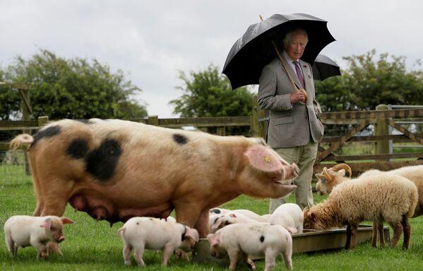 Il principe Carlo visita il parco delle fattorie Cotswold, Gran Bretagna. - Sputnik Italia