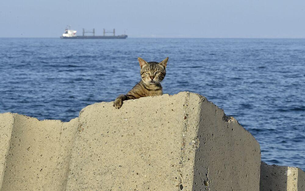 Un gatto sul lungomare durante il coprifuoco imposto per la diffusione del coronavirus nella capitale dell'Algeria.