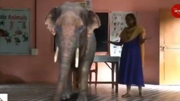 Scuola indiana utilizza la realtà aumentata nelle lezioni online! - Sputnik Italia