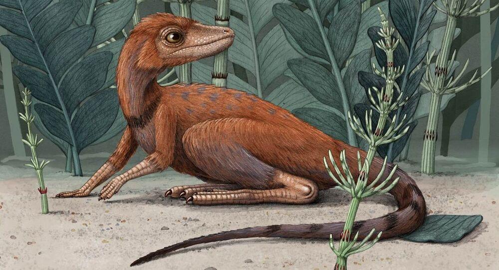 K. kely, il piccolo predecessore dei dinosauri