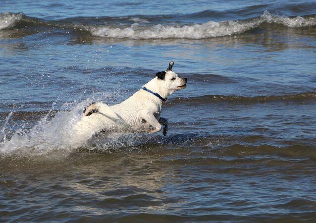 Un cane al mare in Italia