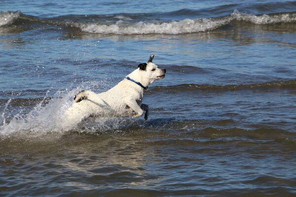 Un cane al mare in Italia - Sputnik Italia