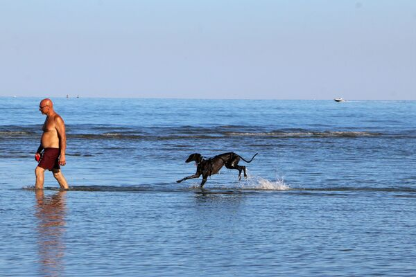Un uomo con cane al mare in Italia - Sputnik Italia
