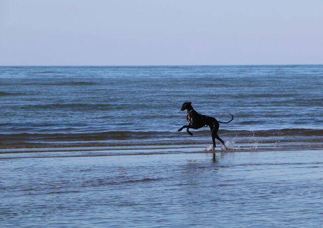 Un cane su una spiaggia in Italia